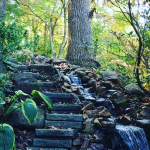 photo of a small waterfall under a tree with a steps beside it and lush vegetation all around